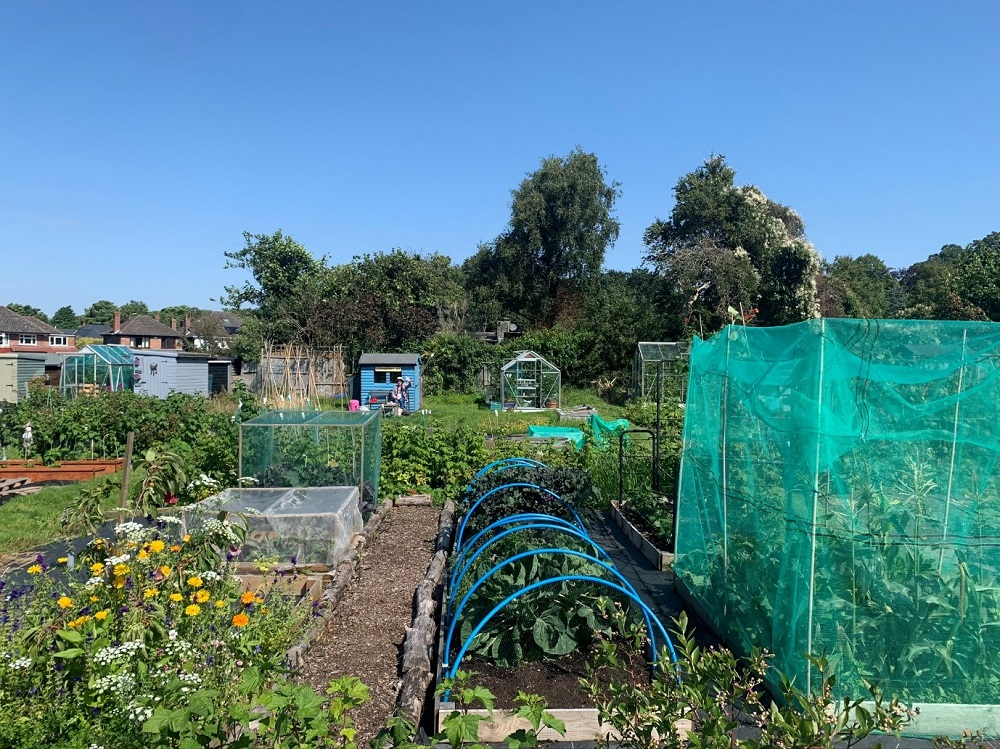 The Liverbirds WI Allotment