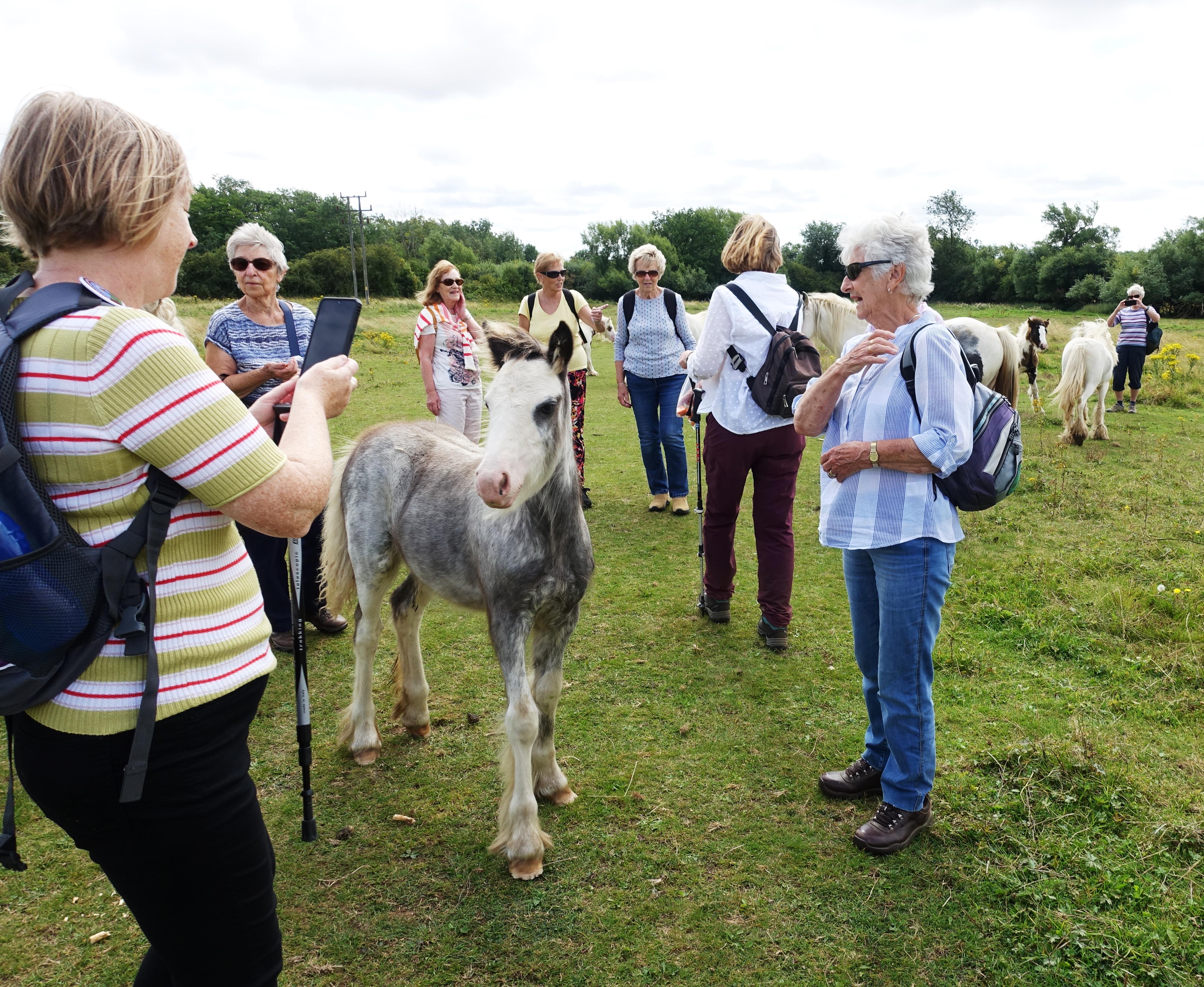 21.08 Isham walk with horses