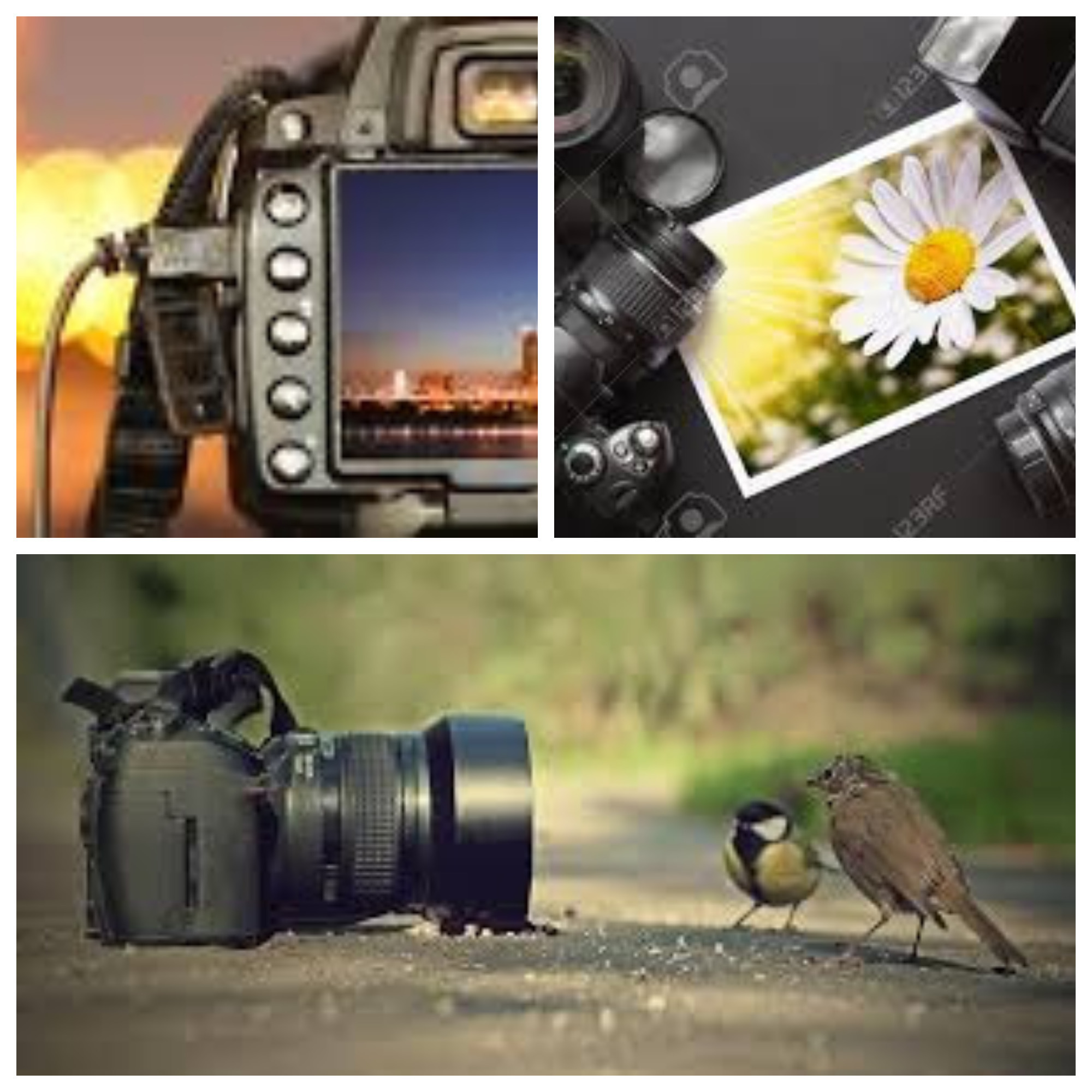 A collage of three pictures showing cameras and photographs