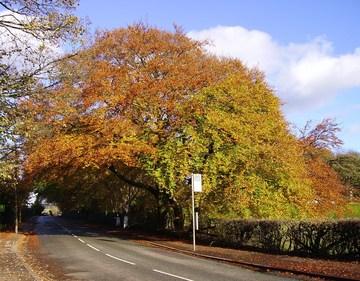 Autumn in Harwood