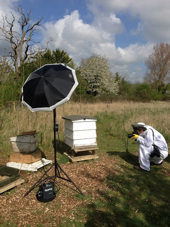 Tatler photographer with bees