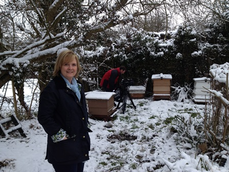 Bee hives in snow