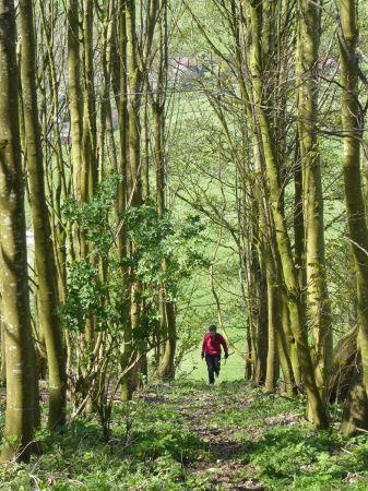 Path through Bramber Beeches