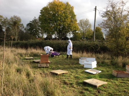 Martha with new bee hives