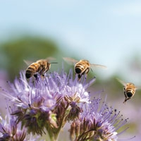 How you helped to save the honeybee
