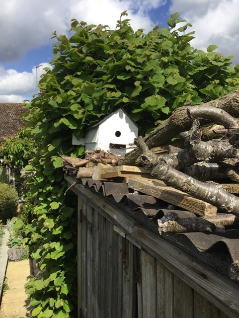 Nesting box taken over by bees